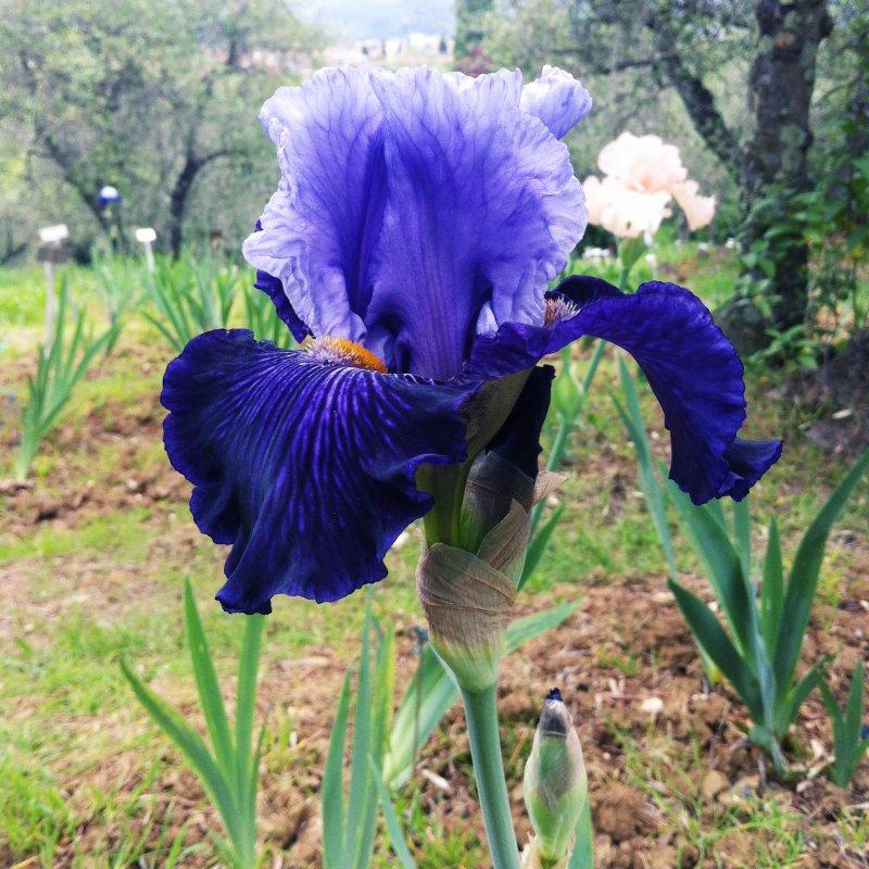 Giardino dell 39 iris firenze cluster blog - Giardino dell iris firenze ...