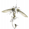 027-wild-fly