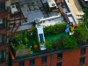 rooftop_nyc_291537