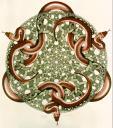 m.c. escher - snakes