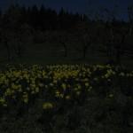 au_clair_de_lune-img_3991